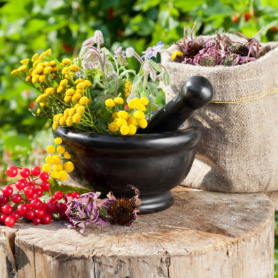 Плоды, цветки и ягоды